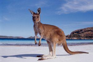 10 причин посетить Австралию